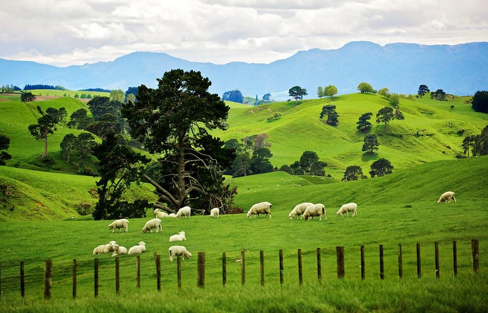 Новая зеландия Hd: New Zealand's Matamata