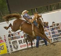 Buffalo Bill Rodeo