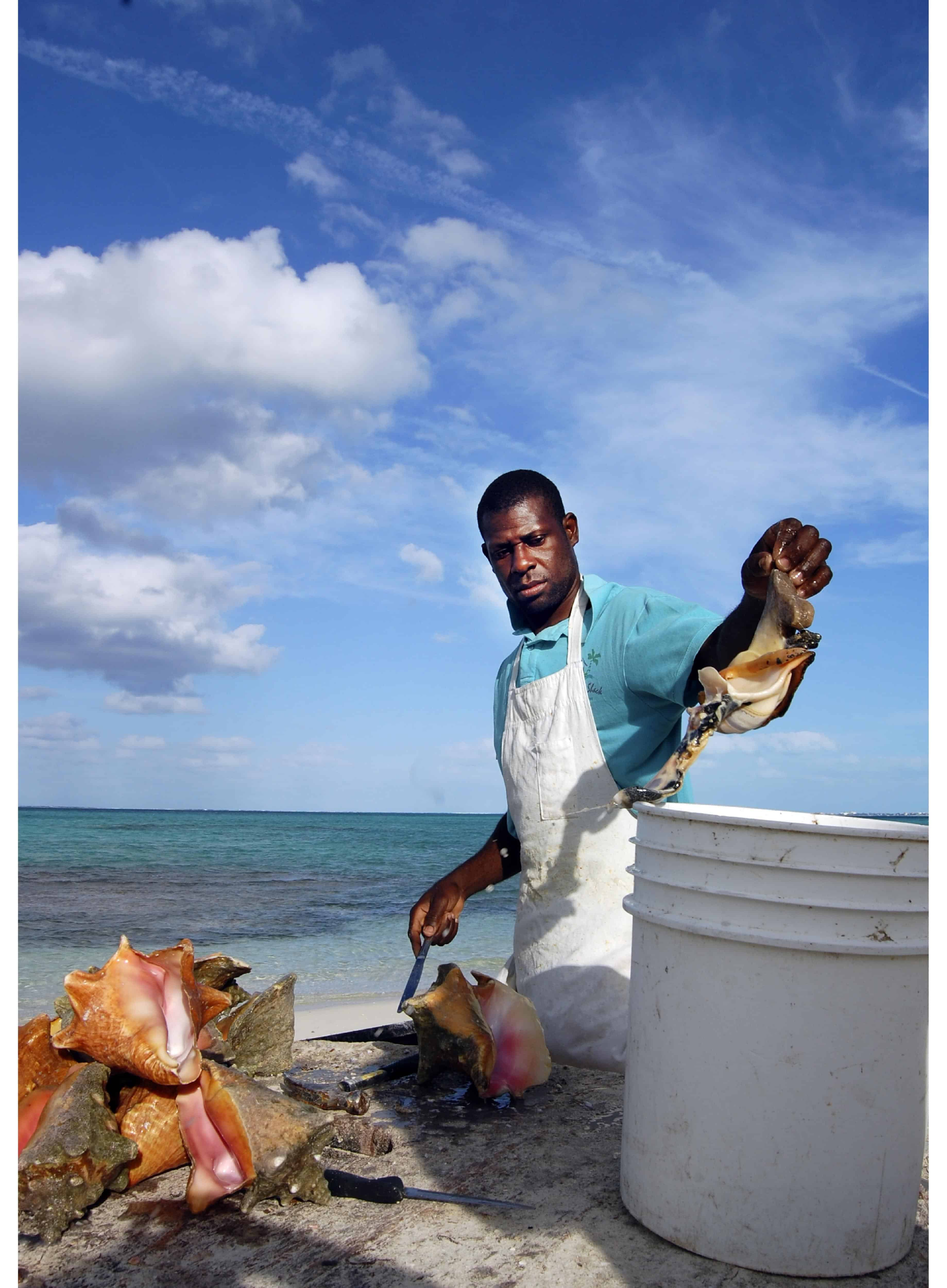 conch fisherman cleaning conch