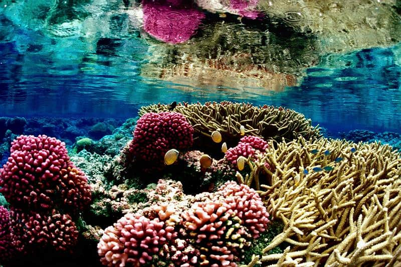 Coral Reef at Palmyra Atoll National Wildlife Refuge