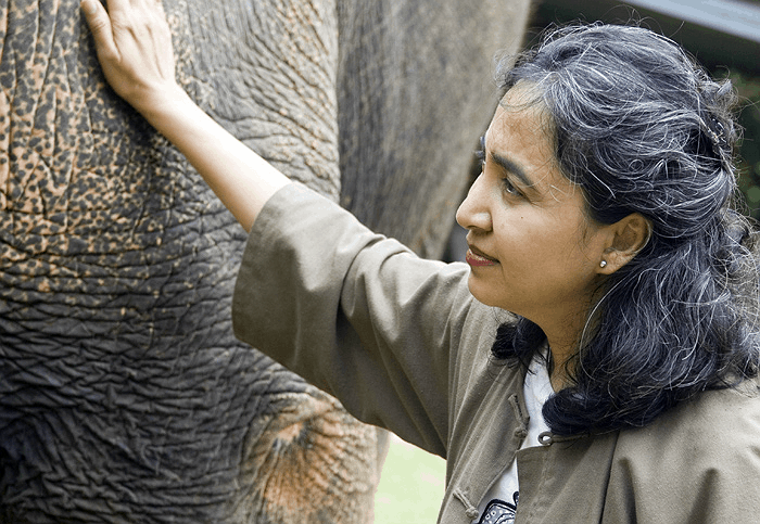 Soraida Salwala, the founder of FAE's Elephant Hospital, pets Motala after her first steps on her new prosthesis