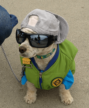 Dog in watts wearing shades