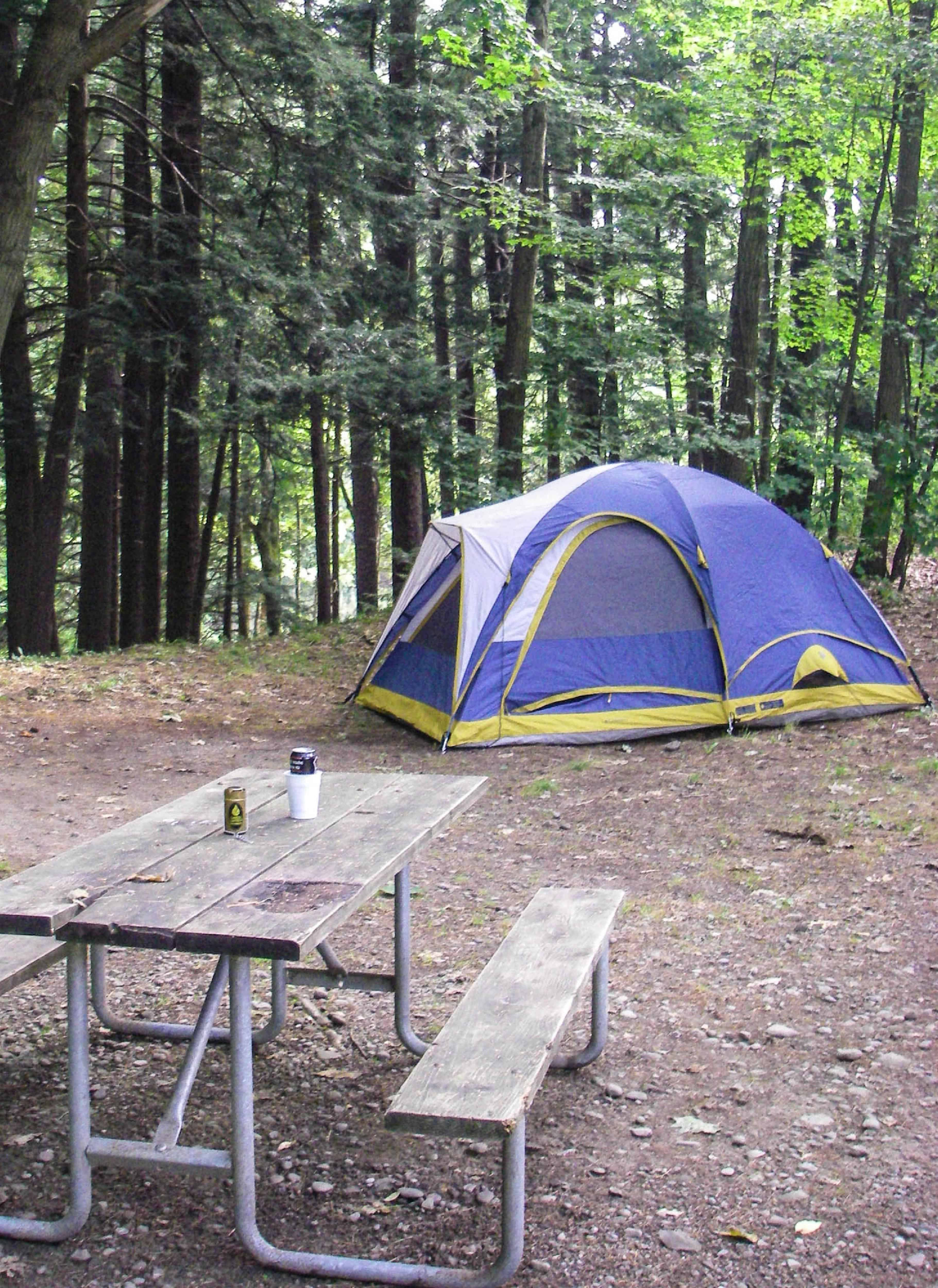 Chenango Valley State Park - Campsite
