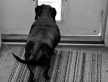 Wanting Out