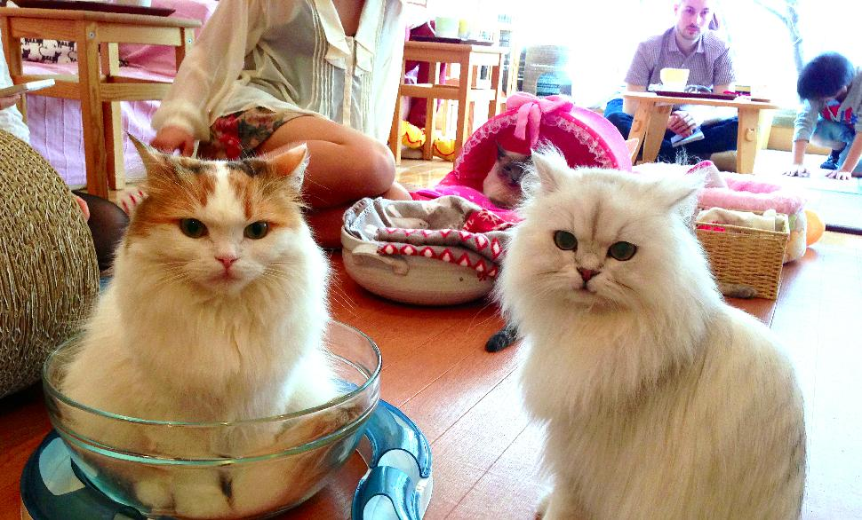 In the cat cafe