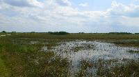 Everglades - Sea of Grass