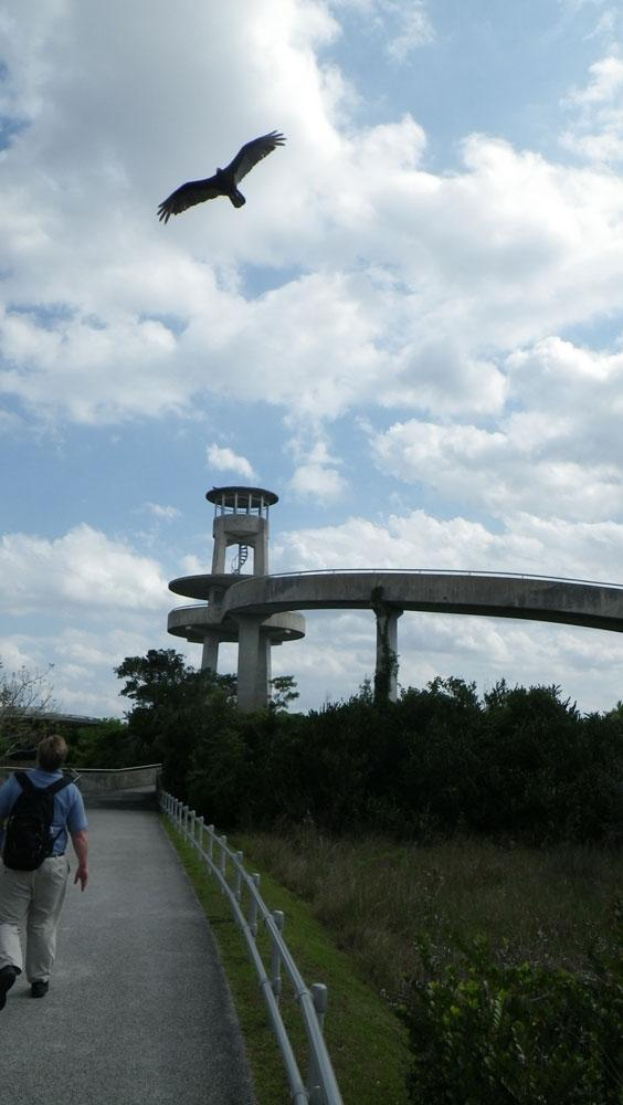 Everglades - Observation Tower