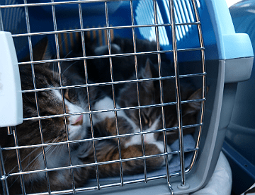 Cats in the cage