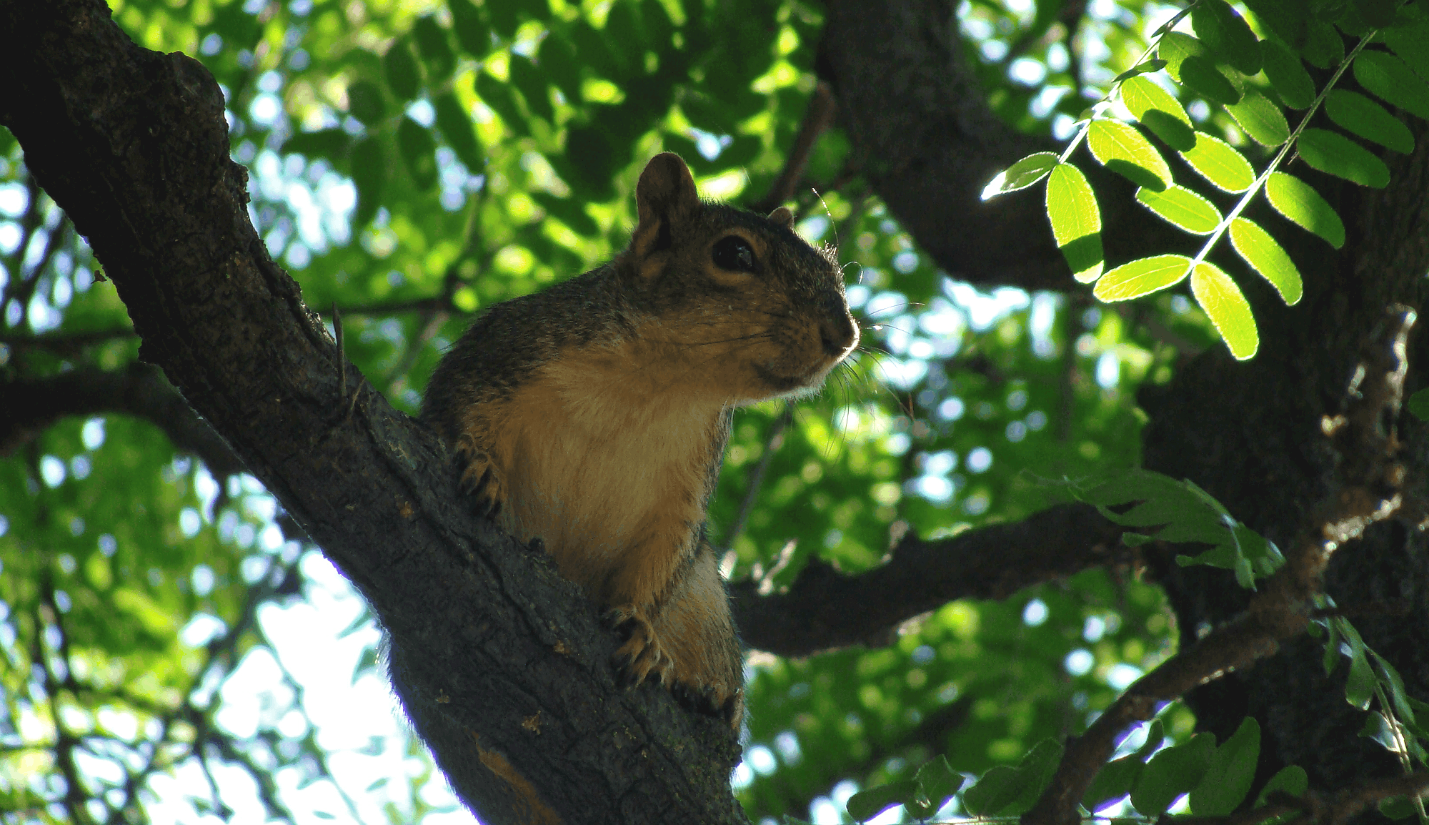 A friendly squirrel in San Jose