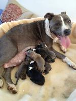 Proud Mary and Her Pups