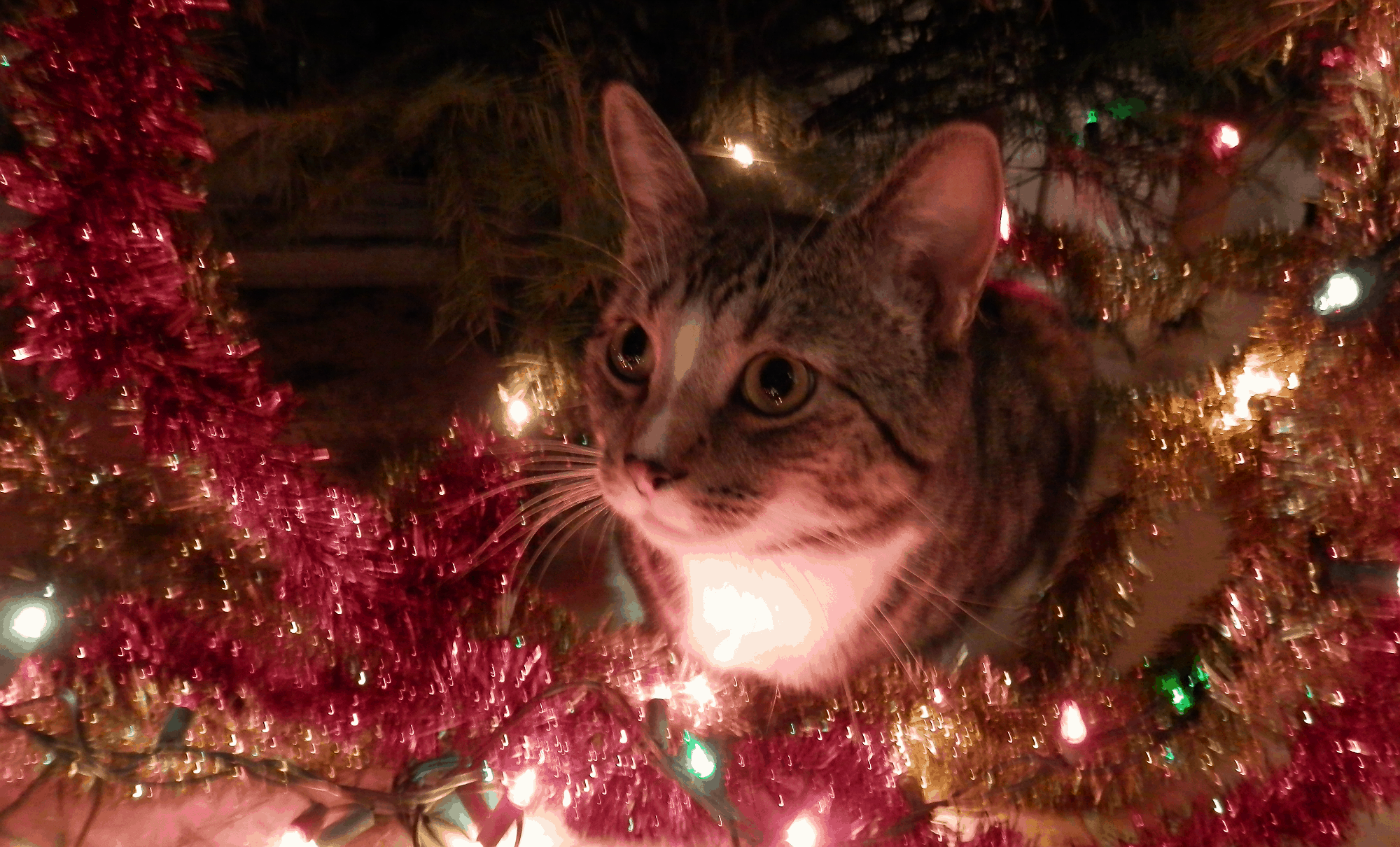 Cat vs. Christmas Tree
