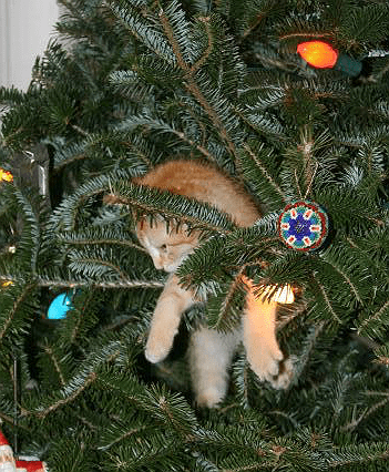 Meow! Cat in a christmas tree