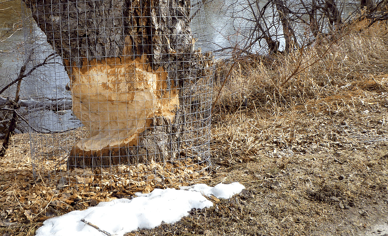 Busy Beaver | Beltline (Victoria Park), Calgary