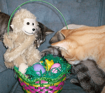 100_9867  The cats playing with the Easter basket