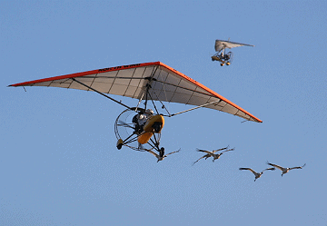 Whooping cranes follow ultralight aircraft into Georgia