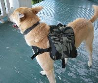 diy dog backpack