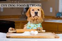 Cooking for Your Dog & Dog Food