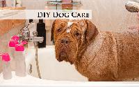 DIY Dog Care