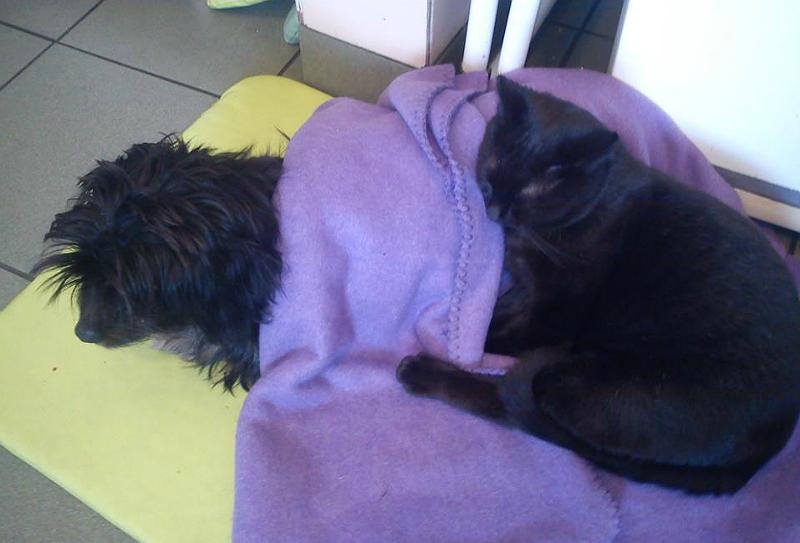 Radamenes Comforting Shaggy Black Doggy