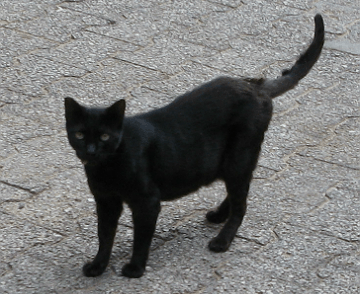 Black Street Cat in the Park