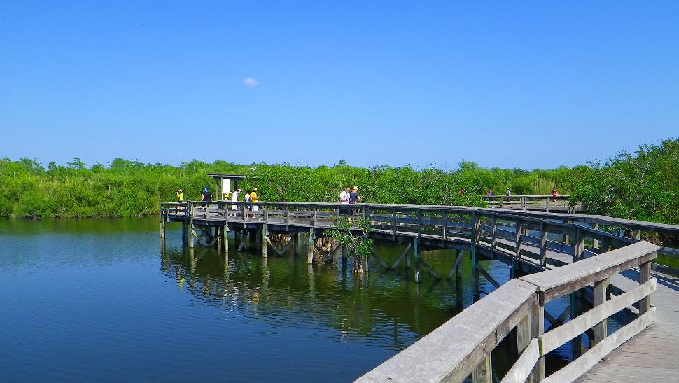 Anhinga Trail - Boardwalk