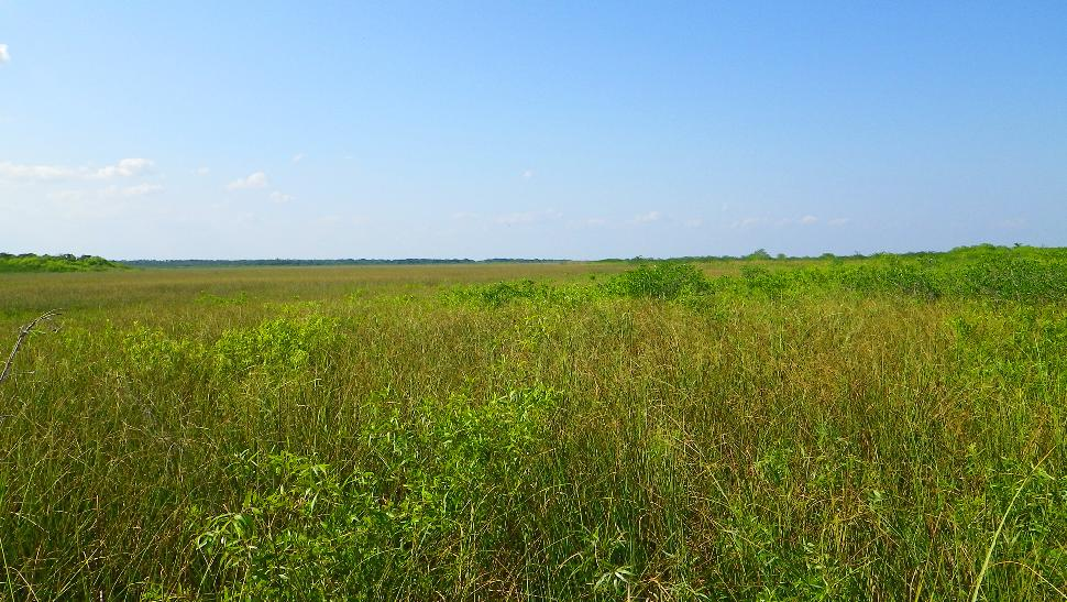Everglades - Anhinga Trail - Marsh