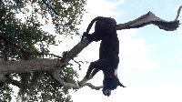 charleston dog hung from tree