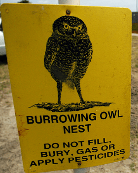 A volunteer at Naval Air Station North Island helps to preserve the natural habitat of the endangered Burrowing Owl on base
