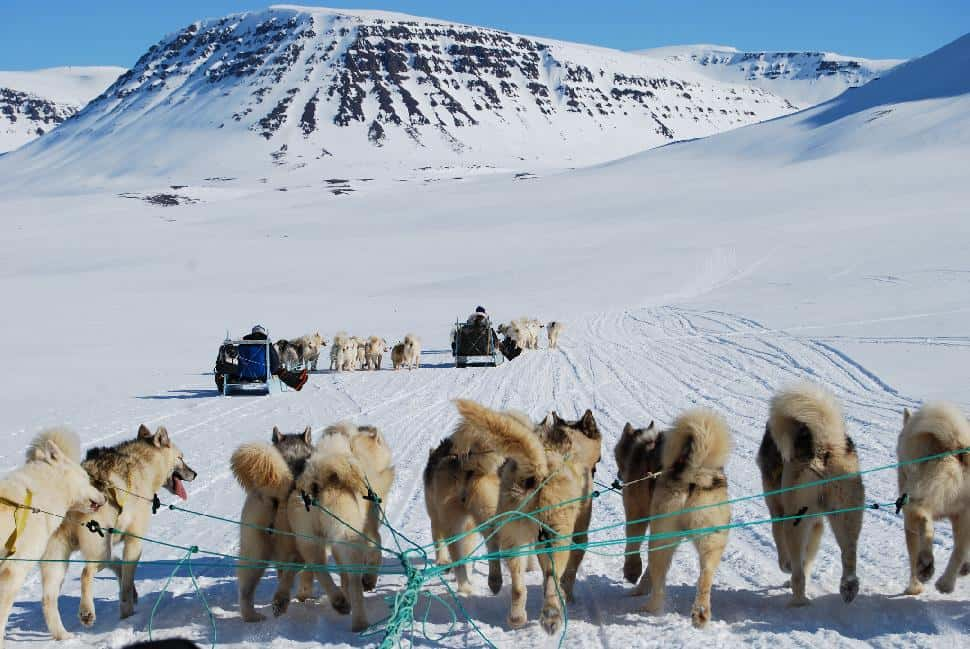 Dog Sledding Greenland