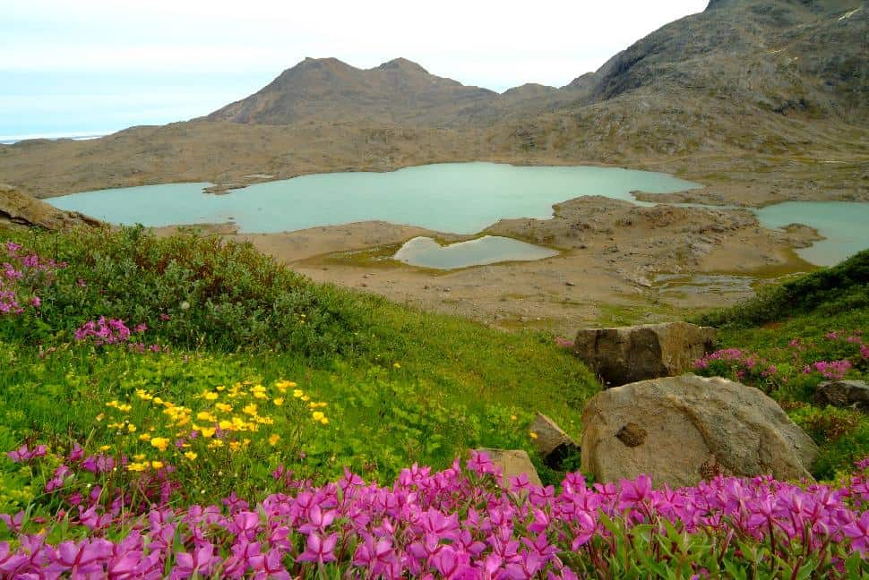 hiking greenland summer flowers lake