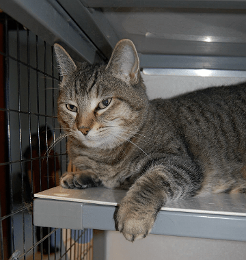 Shelter cats looking for a home in Mendoicno County