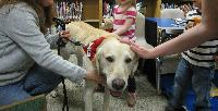 Library Story Hour Featuring American Red Cross Therapy Dogs - U.S. Army Garrison Humphreys, South Korea - 16 April, 2015