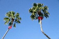 palm trees decorated christmas