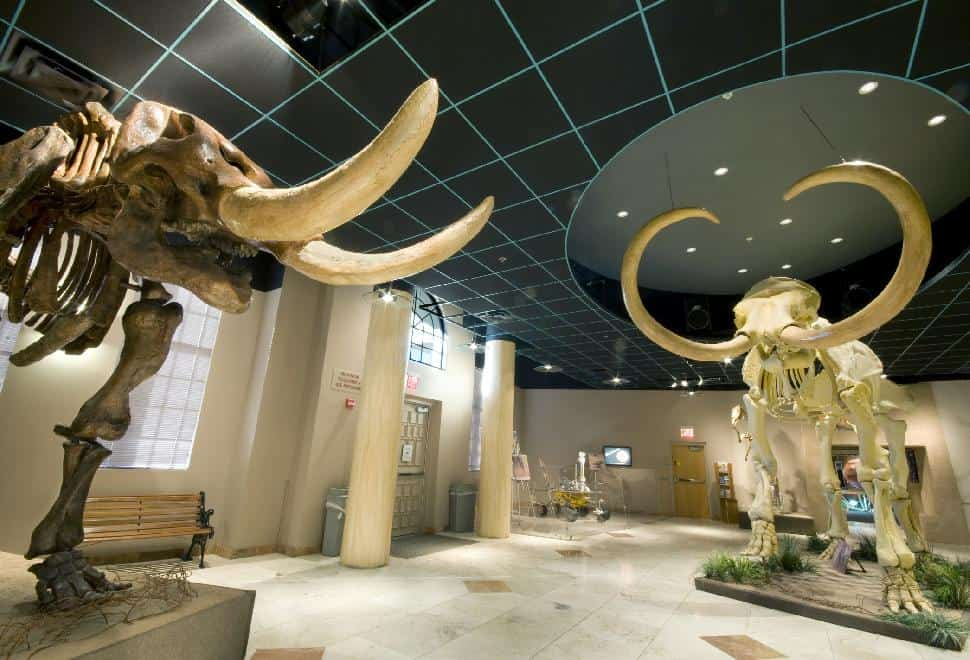 48. Learn About the Past at the Arizona Museum of Natural History
