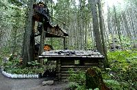 Enchanted Forest BC