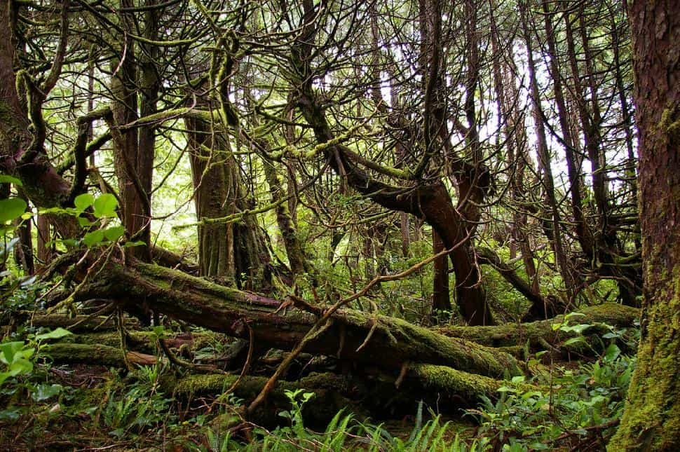 Forest Nootka Trail