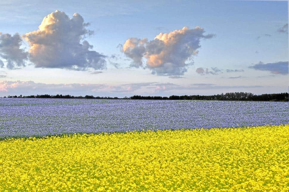 Tourism Saskatchewan Canola Fields