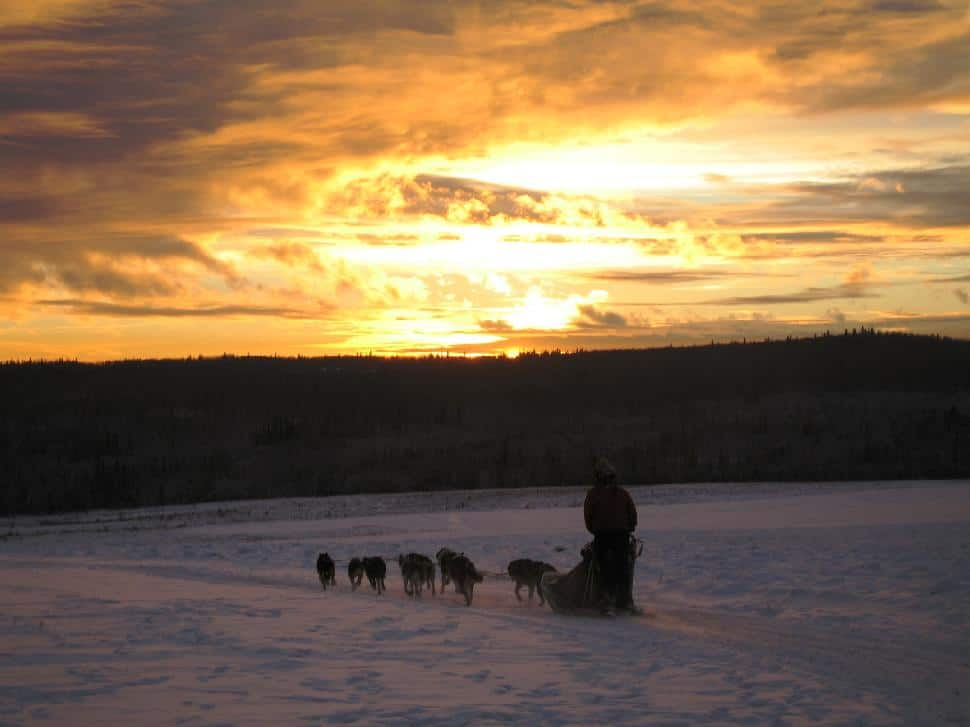 dog sledding fairbanks alaska