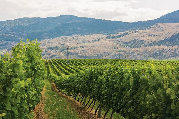Tinhorn Creek Vineyards | BCBusiness